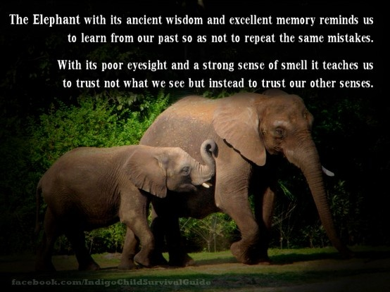 The Elephant reminds us to trust our instincts and to learn from our mistakes.