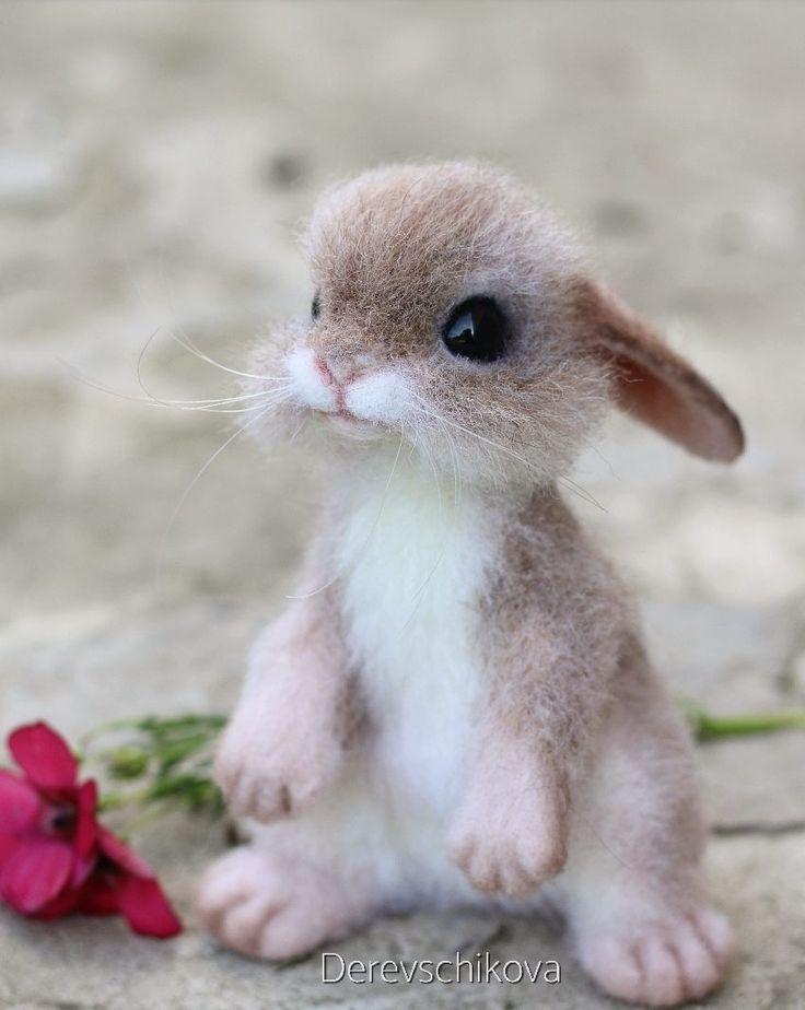 Картинки про животных милых и маленьких