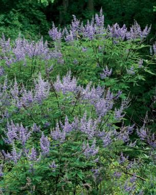 Nature S Way Vitex Side Effects