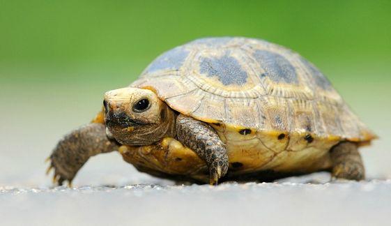 Bien gérer l'hibernation de sa tortue? par le Dr Mélanie Coquelle!