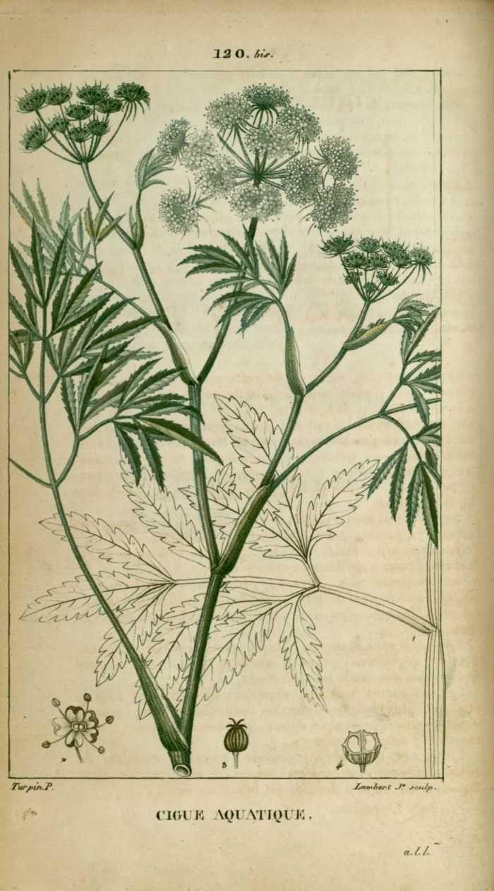 les 25 meilleures id es de la cat gorie plantes aquatiques sur pinterest herbes d 39 int rieur. Black Bedroom Furniture Sets. Home Design Ideas