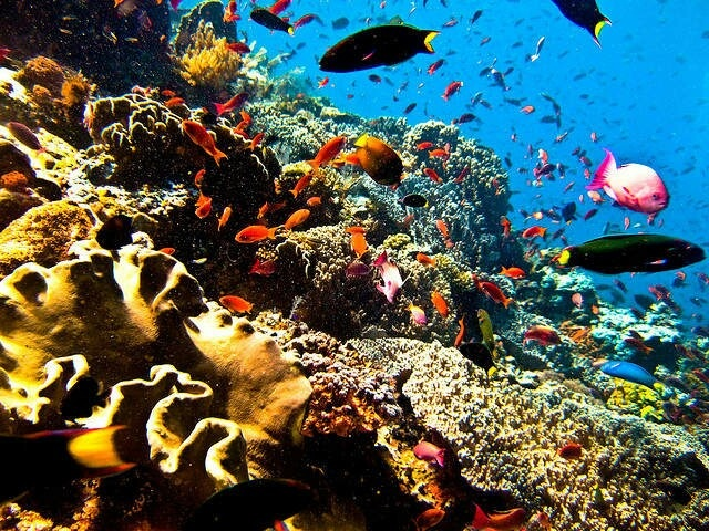 The Bunaken National Marine Park, Manado (North Sulawesi - Indonesia)