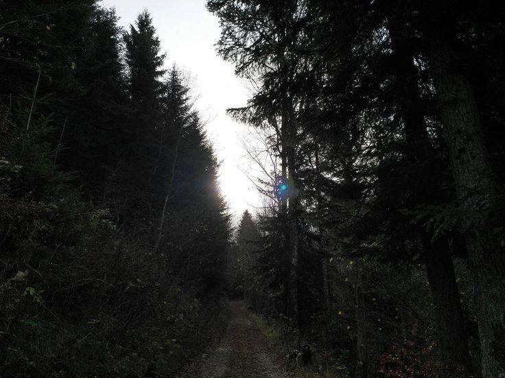 Licht-Schatten-Spiel im Wald.  #Naturmomente #Schwarzbubenland #Solothurn #Nunningen #Schweiz  #photooftheday #magicplaces #kraftorte #switzerland #switzerlandpictures #magicswitzerland  #nature #naturelovers #green #forest #fall #autumn #sky #mountains