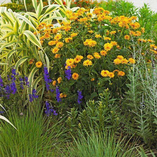False Sunflower thrives in clay soil