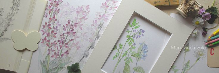 sketchbook by (C) Mari Mochizuki  望月麻里 素描 えびねの素描は料理家 辰巳芳子さんの著書「暮しの向付」の挿絵になりました。 #望月麻里 #art #artist #painter #japan #sketch #drawing #flower #spring #素描 #日本画 #スケッチ #植物 #花 #野草 #春 #鉛筆画 #辰巳芳子