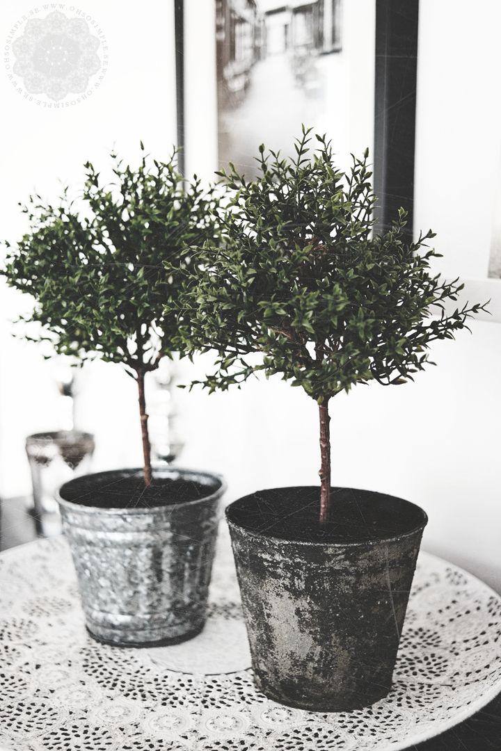 #planter #pots #plants #plantas #macetas #arbolitos