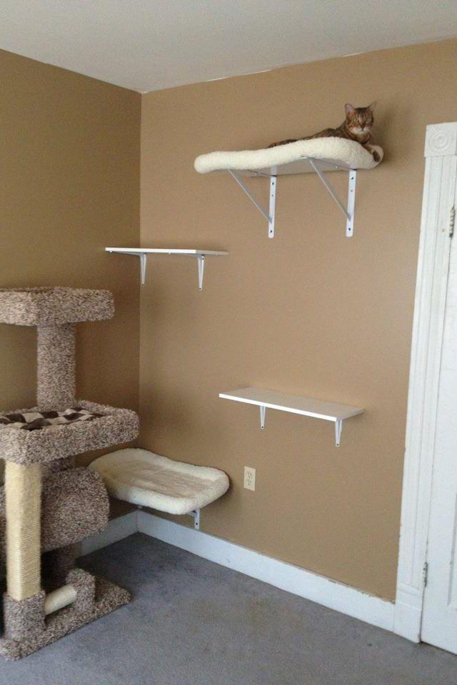 Cat Playground Cat Playground