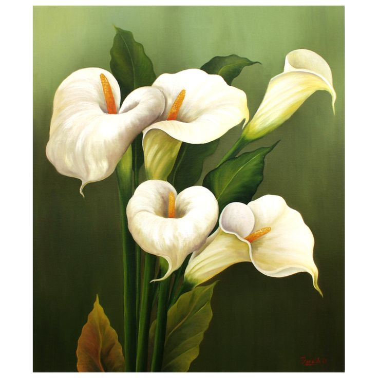 calla lily pictures | return to product detail questions call toll free 800 952