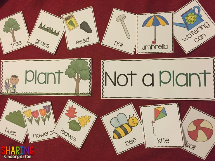 What is a plant and not a plant? Plants {Print & Play Pack}