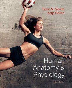 human anatomy martini 9th edition pdf free