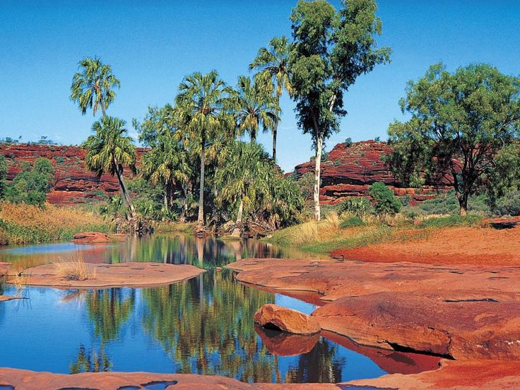 have an oasis moment at Palm Valley in Alice Springs