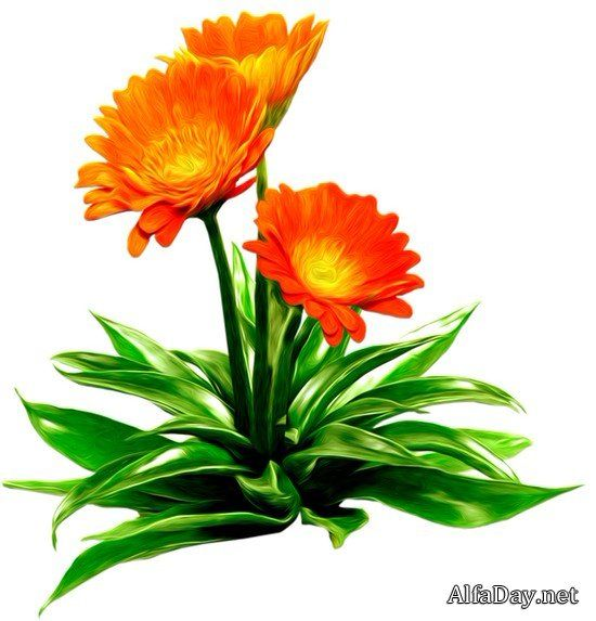Желтые и оранжевые цветы - клипарт на прозрачном фоне