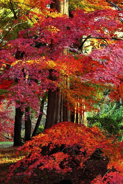 """missfairyblossom: """" autumn leaves by * Yumi * on Flickr """""""