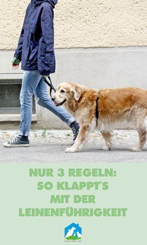 Nur 3 Regeln: so klappt's mit der Leinenführigkeit beim Hund - jetzt im Haustier Notfallkarte Hunde Blog! #hunde #liebe