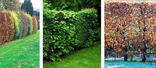 Vysněná zahrada: Pro inspiraci i přes plot skočím