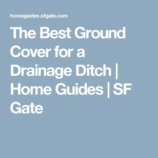 The Best Ground Cover for a Drainage Ditch | Home Guides | SF Gate