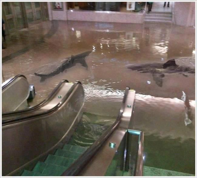 The collapse of a shark tank at The Scientific Center in Kuwait.