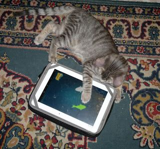 Bambini Niños Children: Felini digitali