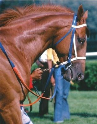 Secretariat ❤!  He always looked to me like he meant business as he went to post. There was just a determination and fire in his eye that you don't see.