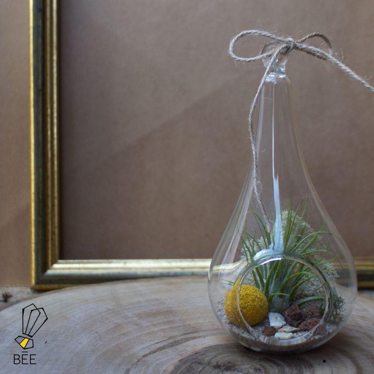 Özel yapım fanuslarımıza yerleştirdiğimiz Airplant'lerle, doğayı dünyanıza sığdırmaya çalıştık. Sipariş için: zeynep@beedesignandflowershop.com adresinden iletişime geçebilirsiniz. #beedesignandflowershop#art#aquarium#terrarium#design#decoration#glass#jar#interiordesign#indoorgardening#nature#treebowl#plant#moss#asparagus#justice#urbanplanting#urbangardening#green#sculpture#succulent#skulent #flower#concept #airplant #handmade