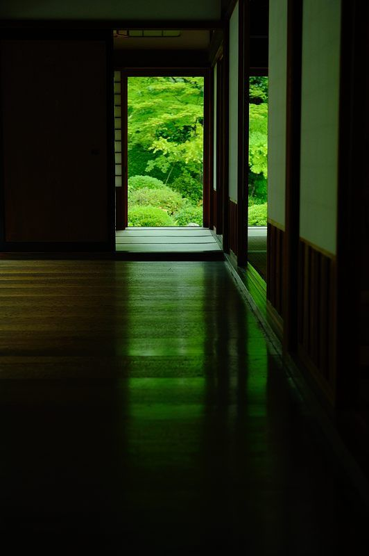 京都源光庵 Genko-an Temple, Kyoto, Japan #Kyoto #Green #緑
