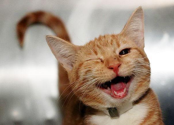 улыбающиеся-животные-коты
