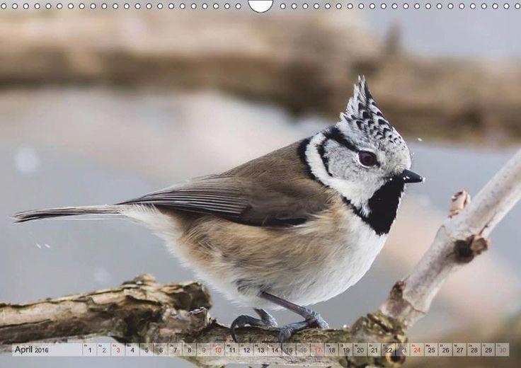 NATUR PUR Heimische Singvögel - CALVENDO Kalender von Karin Dietzel