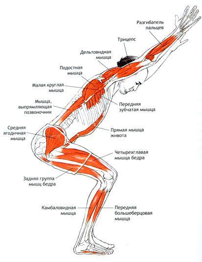 Анатомия йоги — SportWiki энциклопедия