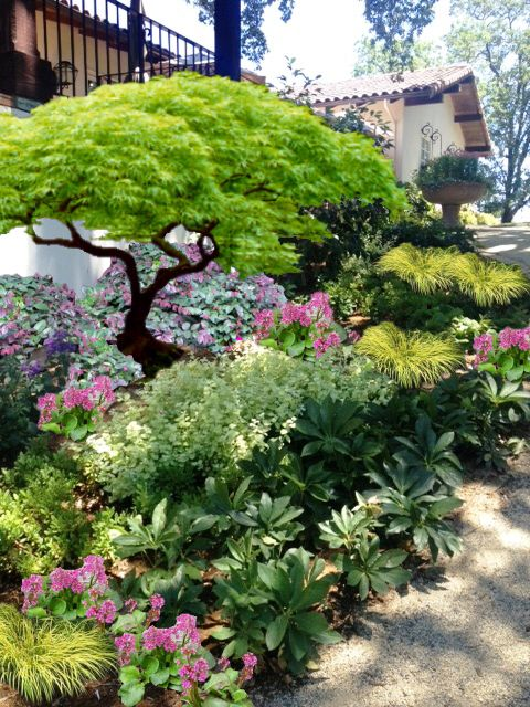 17 best mondo grass images on pinterest backyard ideas for Garden design with japanese maple