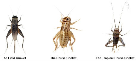 Homes of insects pictures
