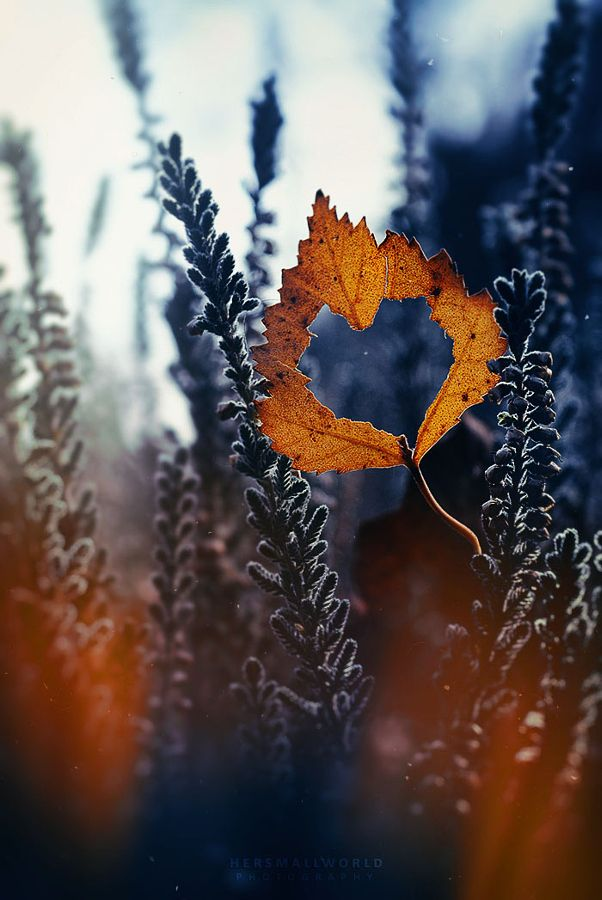 "drxgonfly: "" Autumn heart. (by Hersmallworld Photography) """
