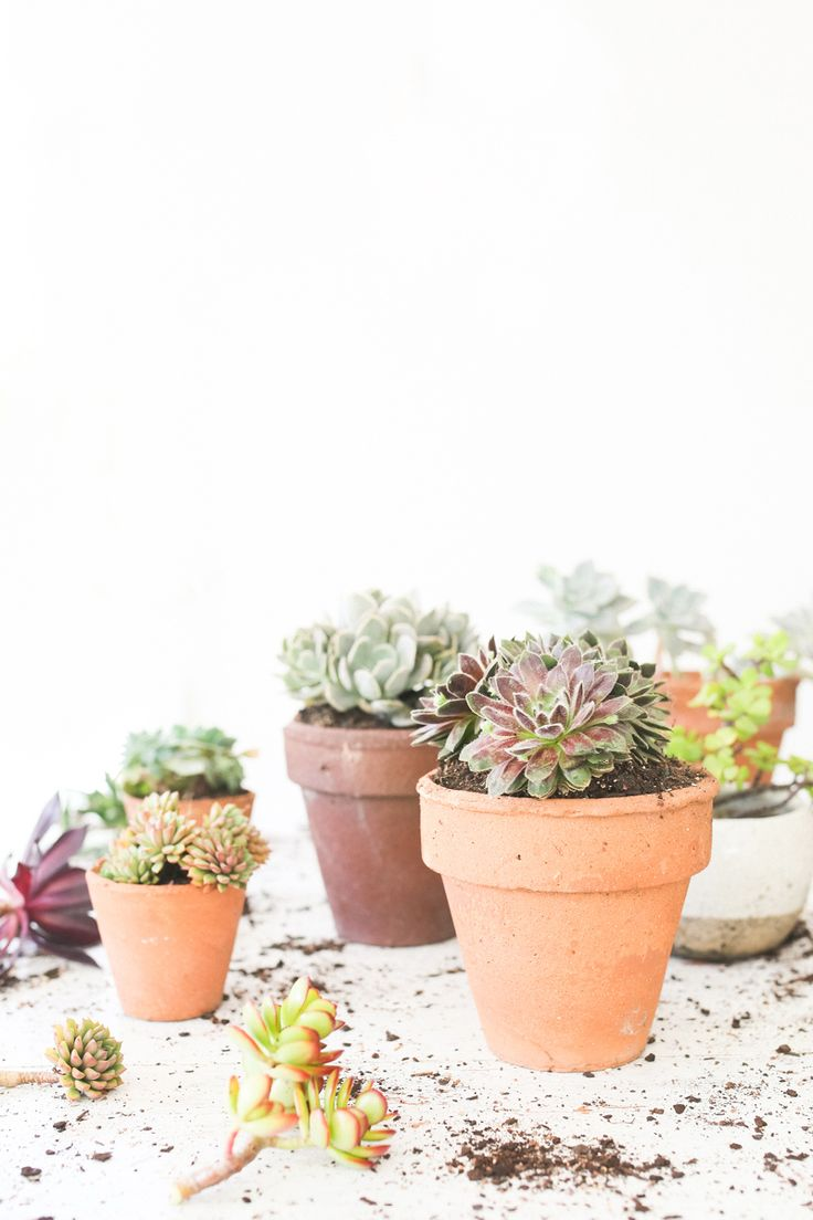 The Slowpoke: PROPAGATING SUCCULENTS  // How to grow new plants from cuttings #free #easy #gardening