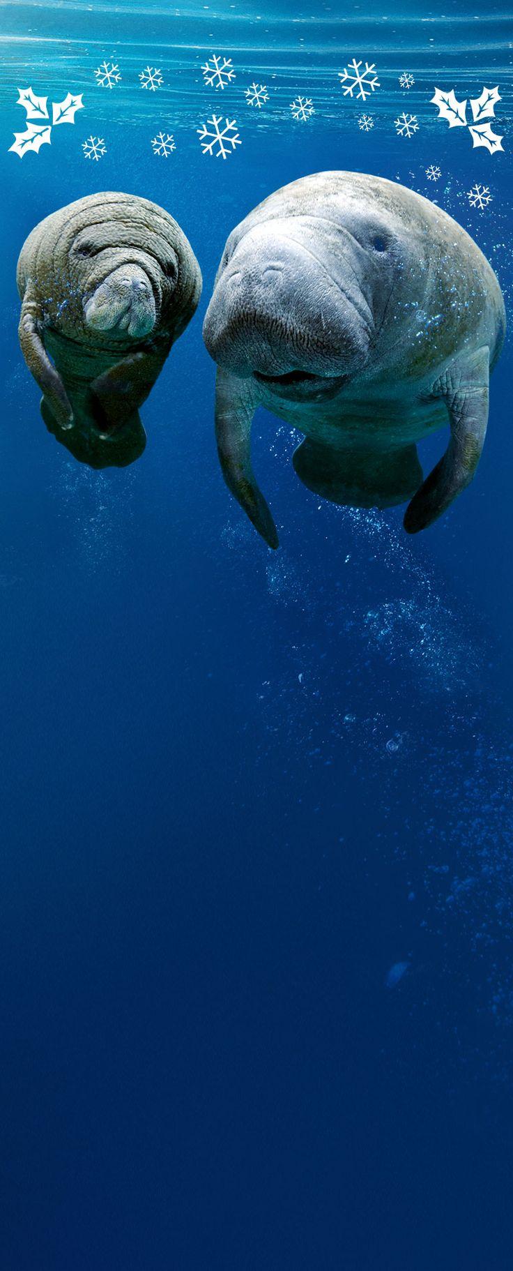 Passa una notte con gli squali. Dormi davanti alla loro vasca e scopri come si trasforma l'Acquario di Genova al calare del giorno.
