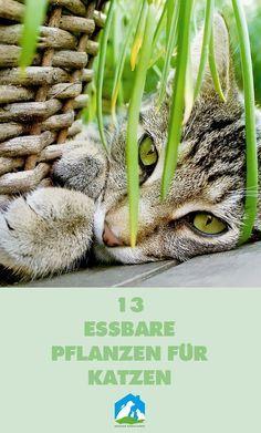 13 essbare Pflanzen für Katzen - jetzt im Haustier Notfallkarte Blog! #haustier #notfallkarte