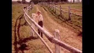 zdeněk liška - YouTube