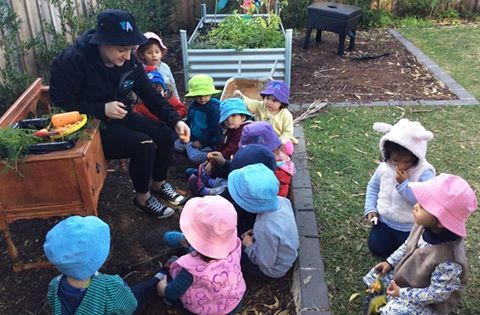 Elesha and her Toddler friends, at Young Academics Toongabbie, were tending to the garden when they discovered their carrot had grown to the size of a sweet potato! After finding the carrot, the Toddler room extended on this experience and discussed their observations of the carrot and then of course, they cleaned, peeled, cut and ate it! #EarlyLearning #YoungAcademics