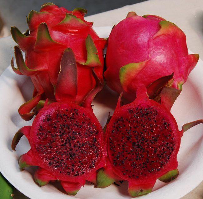 Red Dragon Fruit Seeds (Hylocereus undatus) + FREE Bonus 6 Variety Seed Pack - a $30 Value!