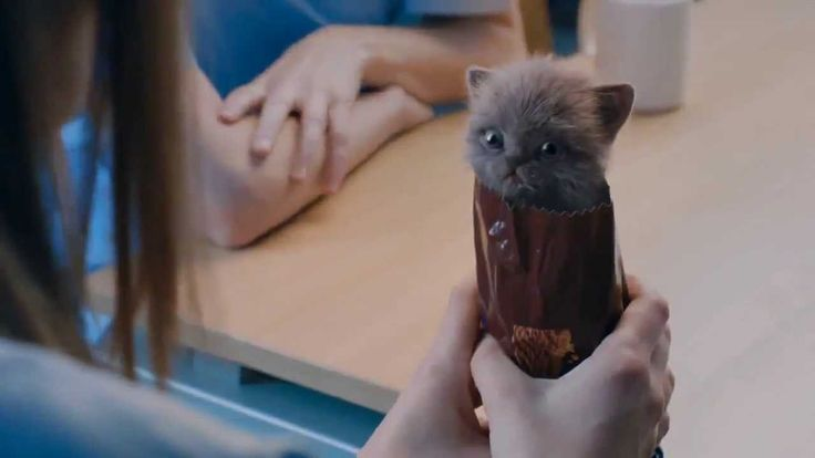 McVities Digestive Biscuits Advert - Kittens.  Originally digestive biscuits were invented as a way to cut down wind.