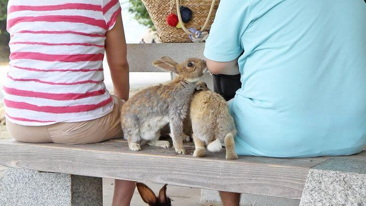 Bunnies Invade Picnic on Japan's Rabbit Island!     #Animals, #BabyBunnies, #Bab…
