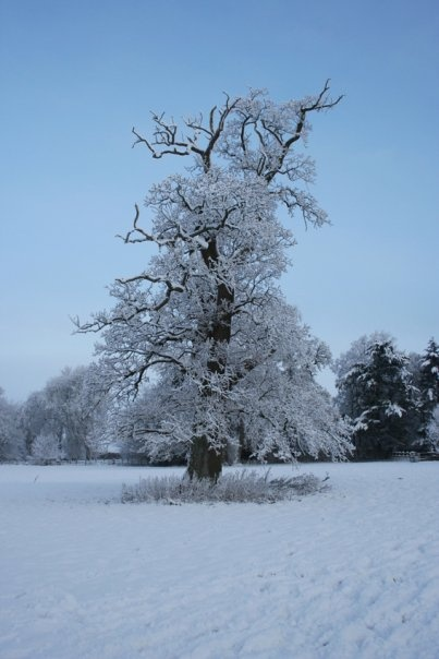 Snowkley,  Tree snow, Oakley Hampshire. Photo by Nigel Smith