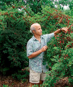 Plants that Taste as Good as they Look: Shrubs with summer fruit, Pretty trees with can't miss fruit,