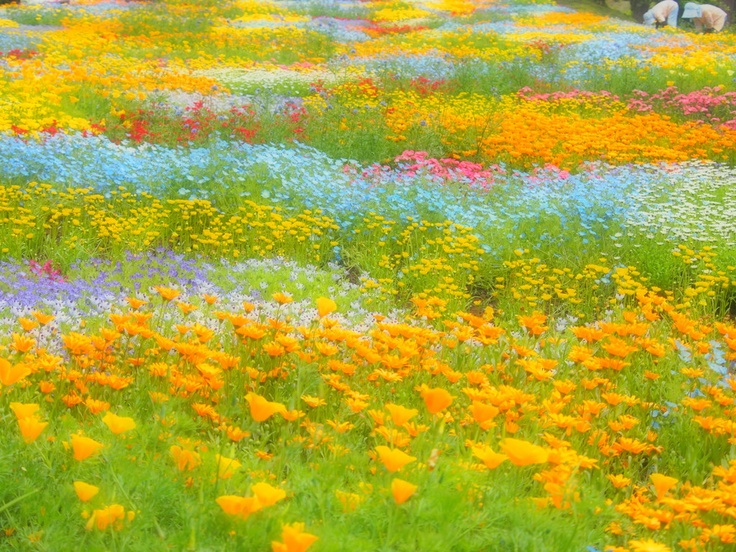 Kujyu flower park at Oita. I would like to paint this. It's just wonderful ~!~