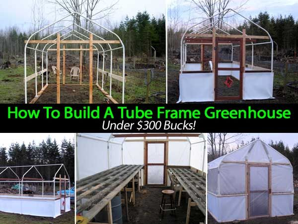 How To Build A Tube Frame Greenhouse Under $300 Bucks! Ever want to build your own greenhouse but not go broke trying to do so? In this post, Jerry and Wendy explain step by step how to build your own greenhouse using a cheap Costco carport frame, some space, and a few other supplies for under three hundred bucks! They include pictures, suggestions where to purchase the supplies, and full directions to make a fully functioning greenhouse right in your own backyard.