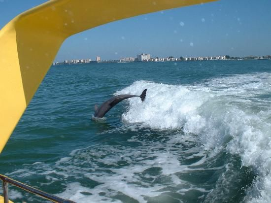 Take a Dolphin Cruise while staying with us at Alden Suites! www.AldenBeachResort.com