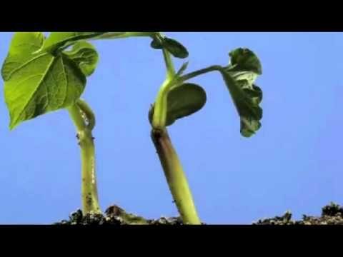 Video crecimiento de una planta
