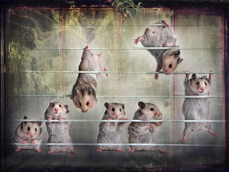 Song about hamsters by Elena Eremina on 500px