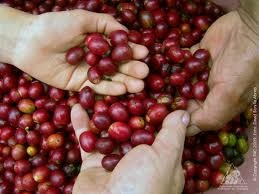 Puro café colombiano para los paladares del mundo.