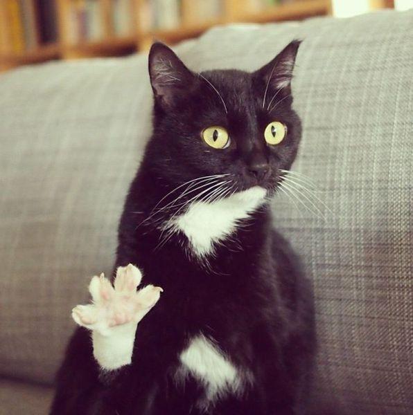 4 Please Kitteh Kats - cat, cats, kitty, gatto, puss, neko, kitten, katzen, gatti, kat, katze, basically cats