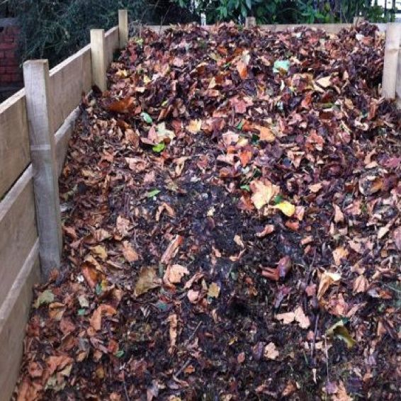 Best 25 Leaf compost ideas on Pinterest Garden compost Insect