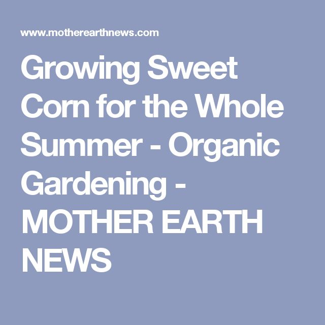 Growing Sweet Corn for the Whole Summer - Organic Gardening - MOTHER EARTH NEWS